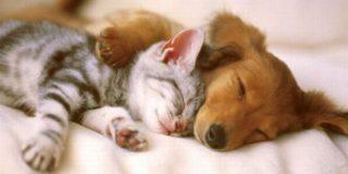 Статистика показала: наши граждане на любовь к животным тратят 1% ВВП