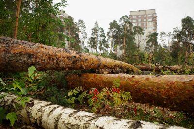 Вырубка зеленых насаждений вокруг мегаполисов будет ограничена новым законом