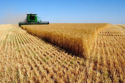 Аграрным бумом называет то, что сейчас происходит в России немецкий журнал Der Spiegel