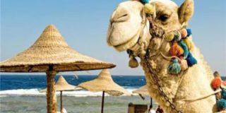 Российская семья заплатит 180-240 долларов только за въезд на египетский курорт