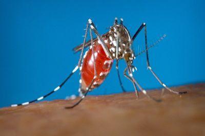 Выявлен первый в этом году случай заражения вирусом Зика