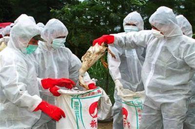 Еще один очаг птичьего гриппа обнаружен в Подмосковье
