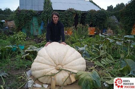 """Гигантская царь-тыква из """"Аптекарского огорода"""" весом свыше 430 кг была официально признана самой большой тыквой в России"""