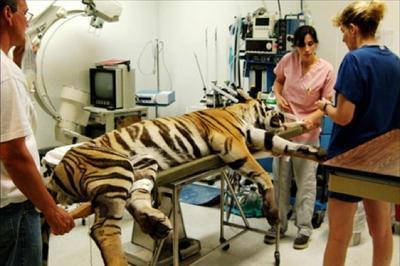 Департамента ветеринарной онкологии Университета штата Колорадо,