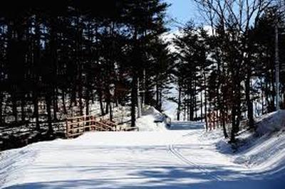 Спортсмены сборной по лыжным гонкам решили не дожидаться 12 декабря