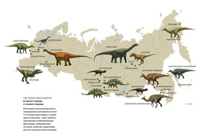Динозавр, найденный российскими палеонтологами, еще не описан в научных трудах