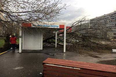 ВЦФО циклон оставил без света около 550 населенных пунктов