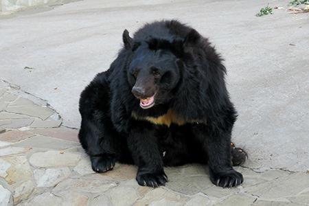 Как Московский зоопарк встречает осень