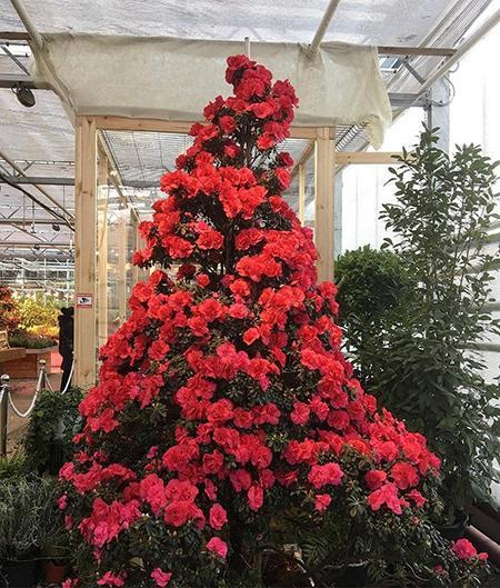"""Японский сад с цветами 30 ноября в """"Аптекарском огороде"""""""