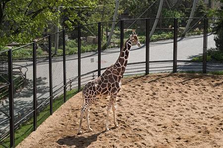 Изоляция Московского зоопарка в фотографиях