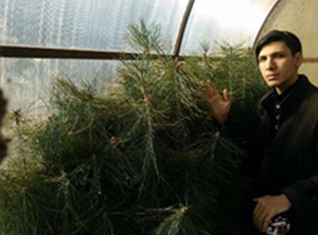В Татарстане студент-экоактивист вырастил в теплице около 200 саженцев сосны